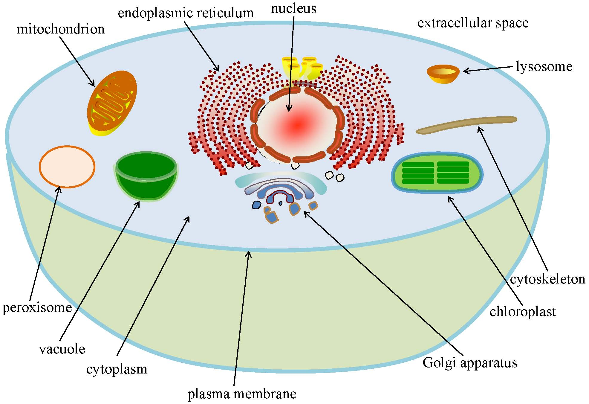 Basic cellular functions and biology